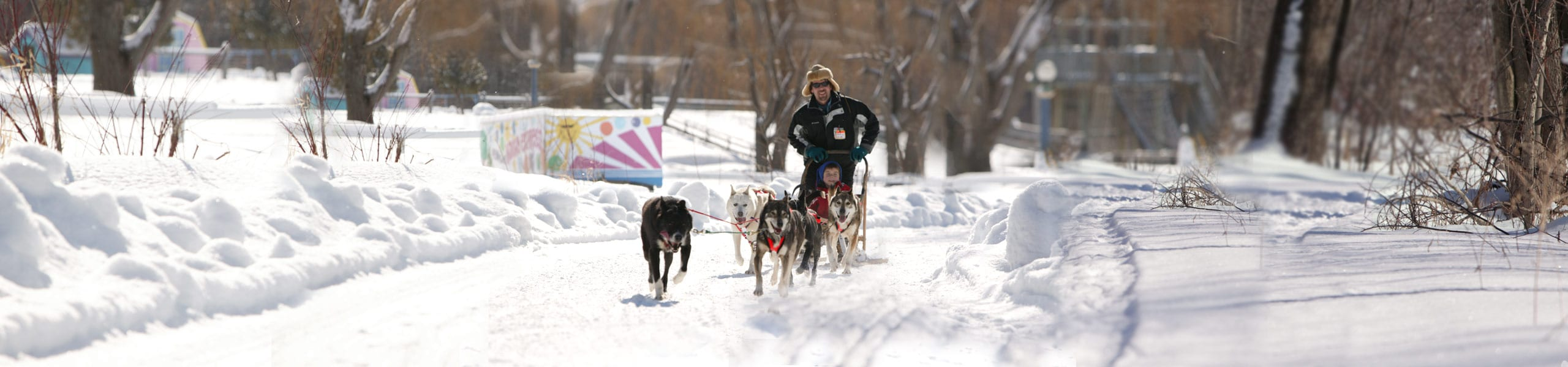 dogsled_back2